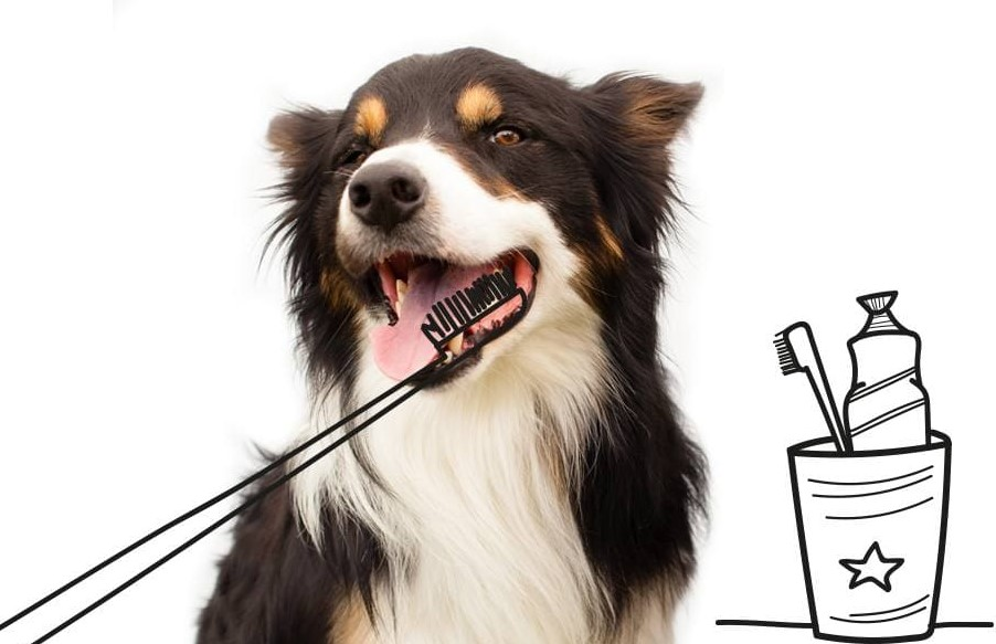 Dog teeth brushing